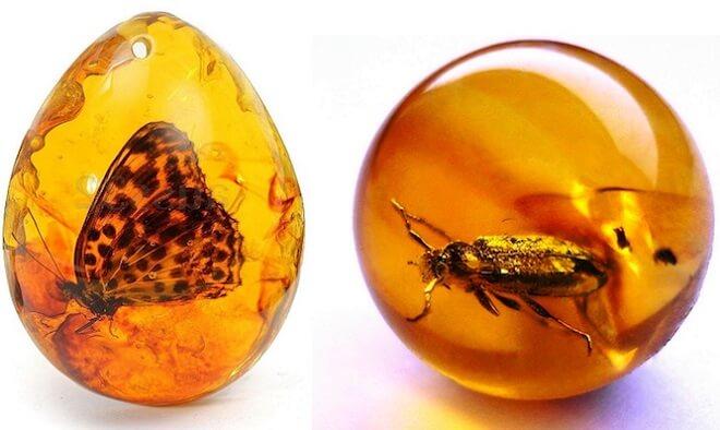 насекомые в янтаре