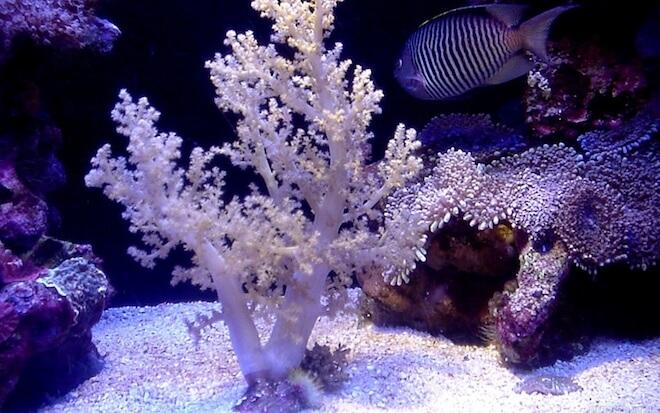 Виды кораллов